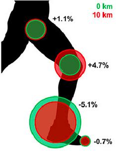 跑鞋彎曲勁度會影響下肢肌肉使用比例